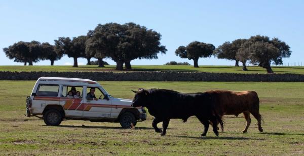 Toro y dehesa for Oficina turismo salamanca